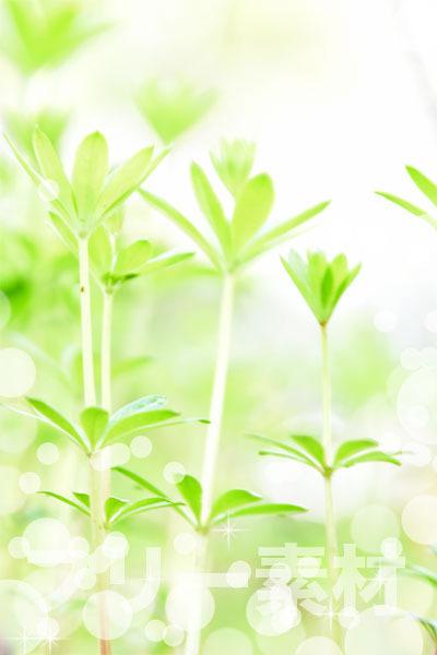 グリーンのイメージ001.jpg