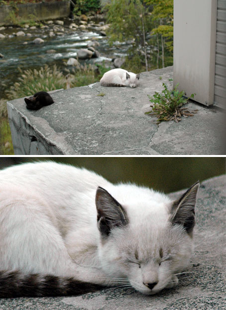 定山渓の猫