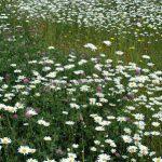 空き地の雑草が花畑