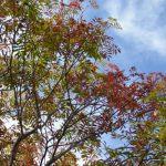 林の秋をちょびっと写真に撮りました