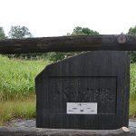 バッタ塚は足をくすぐられた集団トノサマバッタの塚だった
