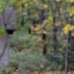 か弱い雪虫が飛ぶ季節