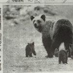 熊のツッペも取れる春