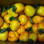北海道の干し柿は鮭トバの気持ち?