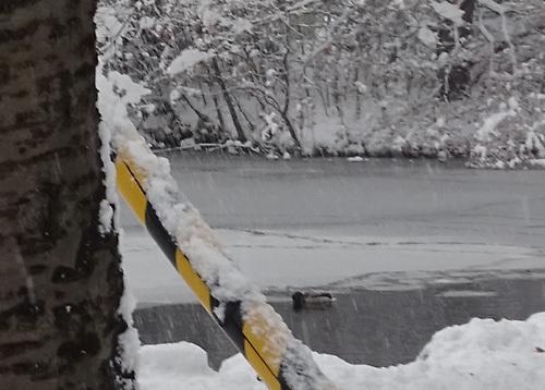 冬の道庁の池