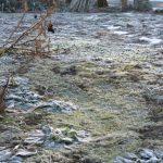 霜がおりて、サボテンになったクローバー