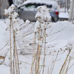 真冬の札幌は、しばれて野菜も凍っちゃう?