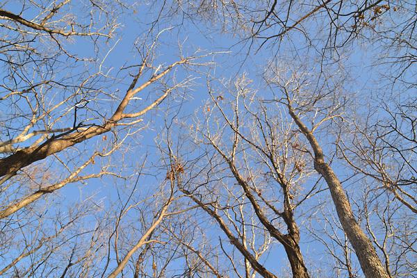 冬の林と空