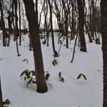 木の前で消えた雪上の足跡はあの子かな?