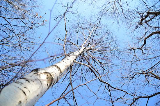 木の下から空