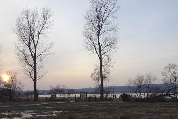 北海道 宮島沼のマガン
