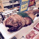 スーパーにいたオオカミウオ
