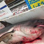 歯がむき出し!スーパーにサメ