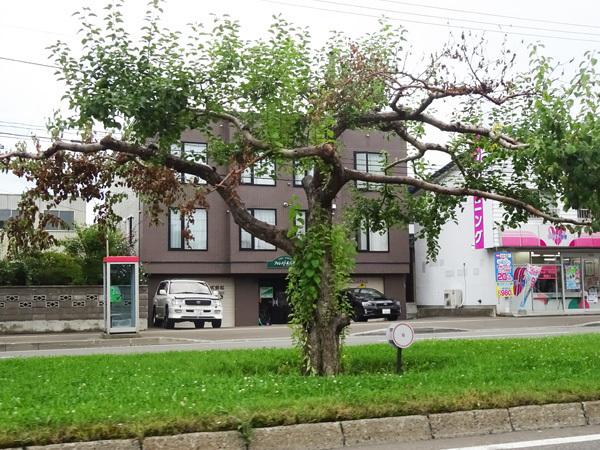 札幌豊平区のリンゴ並木