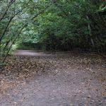 『苔の同門』は支笏湖の傍にある美しい苔の回廊