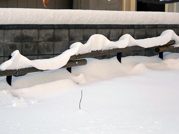 雪の積もった柵