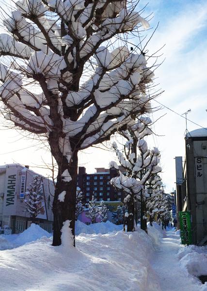 雪の積もったイチョウ