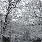 ねっぱつく雪は姿いろいろ