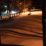 真冬の公園は、木の影も 波もよう
