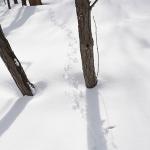 雪の上の小さな足跡をたどる