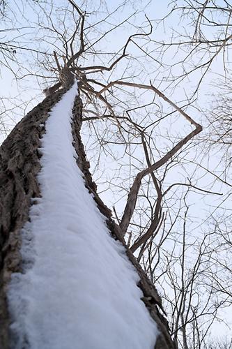 雪が吹き付けた木