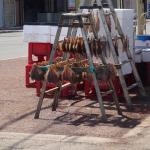 余市町の新岡鮮魚店で箱買い
