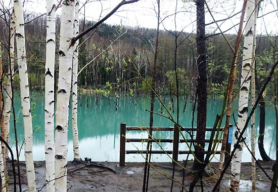 台風のあとの青い池