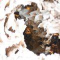落ちたスズメバチの巣