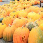 JRニセコ駅の秋はカボチャでいっぱいになる