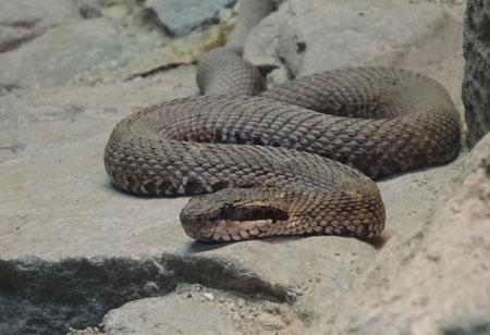 旭山動物園 爬虫類館