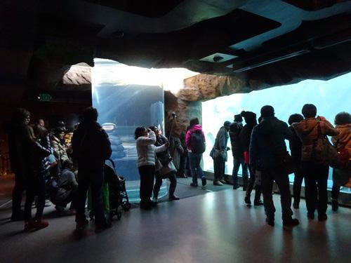 旭山動物園 アザラシ館