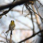 小春日和の林は野鳥ものほほん