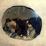クマ避けの鐘はクマ寄せの鐘 札幌目撃最多