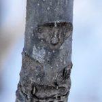 冬の林、なーんかいいこと あるかもしれない