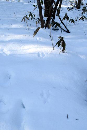 エゾリス足跡