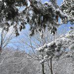 一気に冬に逆戻り雪と氷がバラバラと落ちる林
