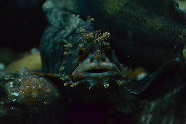 室蘭水族館