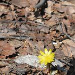 ガクは花びらを支える縁の下の力持ち