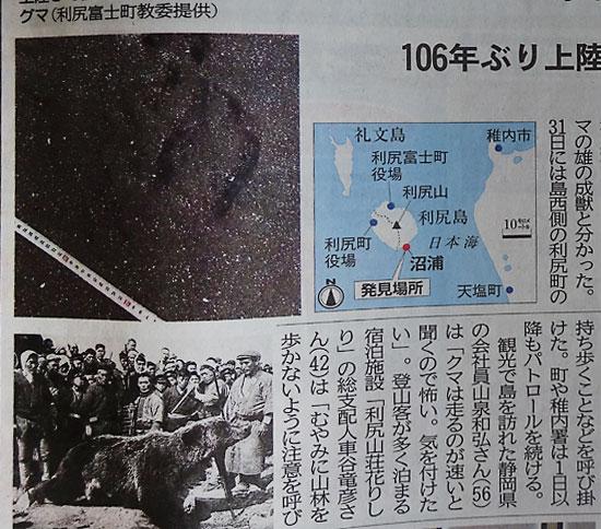北海道新聞 利尻島にヒグマ上陸