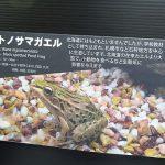 北海道にいないはずのトノサマガエルが生息しているわけ