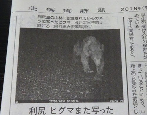 利尻島のヒグマ