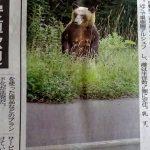 札幌市のこんな所にもヒグマが仁王立ち