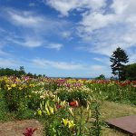 オーンズ春香山ゆり園へは無料送迎バスが便利!