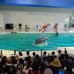 おたる水族館のイルカショー2018は時間を選んでもっと楽しめる