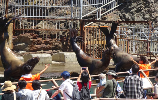 小樽水族館トドのショー