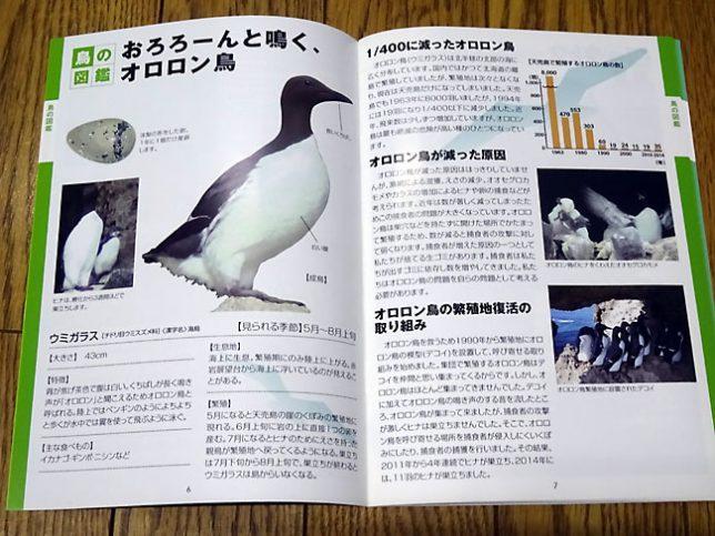 天売島パンフレット オロロン鳥