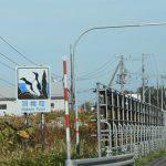 海鳥の島 天売島 と 高級サフォークの焼尻島へは羽幌沿海フェリーで