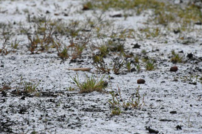 凍った地面