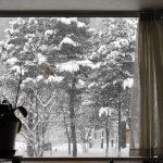 イノシシが短足のおかげで積雪が少ない札幌