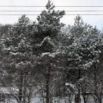 札幌は冬に逆戻り